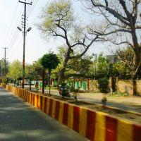 AMU road           naturephotographyindia.com, Алигар