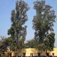 Chiranji LAl School, Алигар