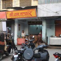 Корова у магазине, Варанаси