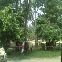 P.A.C. Road ,Moradabad, Морадабад