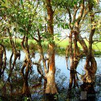 Shekha Jhil          naturephotographyindia.com, Хатрас