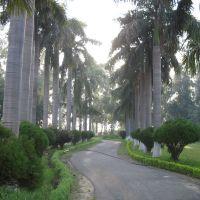 Beautiful Pavement, Карнал