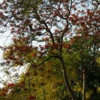 Trees, Карнал