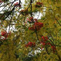 Flowers, Карнал