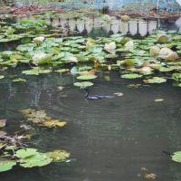 Saras Bag, Pune, Пуна