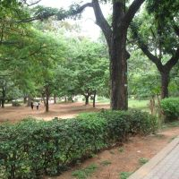 Walkthrough at the The Cubbon Park at Bangalore, Бангалор
