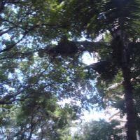 கோயம்பேடு കോയംബേടു కోయంబేడు कोयमबेडू   SAF Games Village - Koyambedu  1498, Мадрас