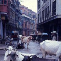 Bertram Street - 1975, Калькутта