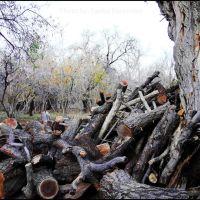 جنگل، به روایت تبر, Марагех