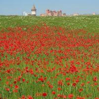 rosellas i torre de l´aigua, Сабадель
