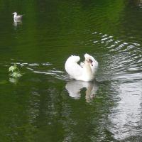 El Cisne  en Castrelos., Виго
