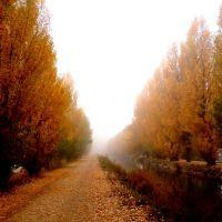 Niebla en otoño, Вальядолид