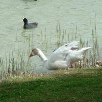 Laguna de Duero - ¡Al agua patos!, Вальядолид
