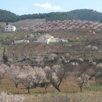 Arbol de Almendros, Мурсия