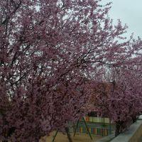 Almendros en flor, Толедо