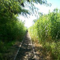 Vegetación crecida - FCGMB, Мерседес