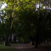 sombras y frescura, Альта-Грасия