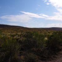 Vegetación en el Parque Nacional Lihuel Calel (febrero 2006), Женераль-Рока