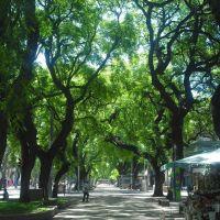 Avenida San Martin..., Мендоза