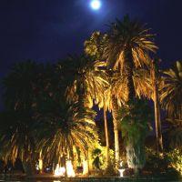 Palmeras iluminadas (Lit up Palm Trees), Росарио