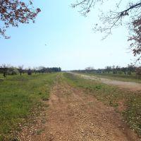 Campo Volo, Бискегли