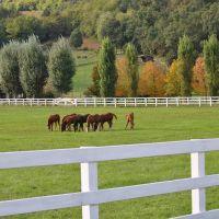 HORSE, Виченца
