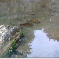fish, Виченца
