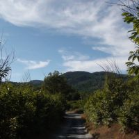 monte Reventino, Косенца