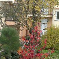 grapevine in autumn, Ночера-Инфериоре