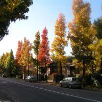 CREMONA - Via Trebbia - Valzer di Colori autunnali, Кремона