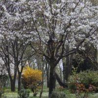 La primavera a Colle Aperto, Мантуя
