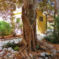 Licata little park, Ликата