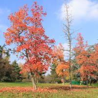 Un po di Canada al parco Bramante, Асти