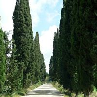 Cypress Alley going to Fortezza di Poggio Imperiale, Виареджио