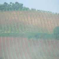 Vineyards of Tuscany, Пистойя