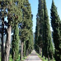Limonaia - Prato, Прато