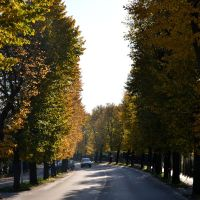 Autunno - via Firenze - Prato, Прато