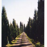 Tuscan Cypresses, Сьена