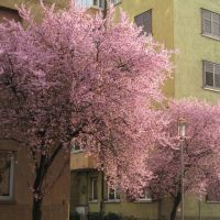 Primavera in Via Torino - Bolzano, Больцано