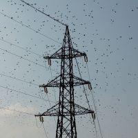 Modena - Birds Attack, Модена