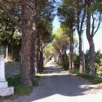 Viale della Rimembranza, Кампобассо