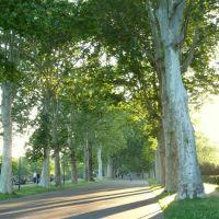 le lunghe ombre dei platani, Пьяченца