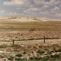 Camel, Карабутак