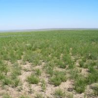 Казахстанская степь, Шубаркудук