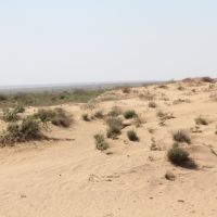 Песчаная пустыня, Шубаркудук