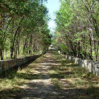 Асубулак парк Победы заросшая центральная аллея парка, Асубулак