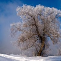 Magic tree on river border (-30C), Белогорский