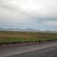 Табун в сумерках. Горы Байжан., Катон-Карагай