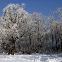 snow and frost, Усть-Каменогорск