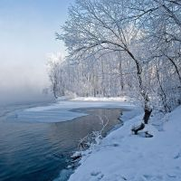 snow tree on river border, Усть-Каменогорск